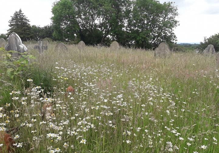 Fury at overgrown grass at Holy Trinity Church graveyard in Gwersllt