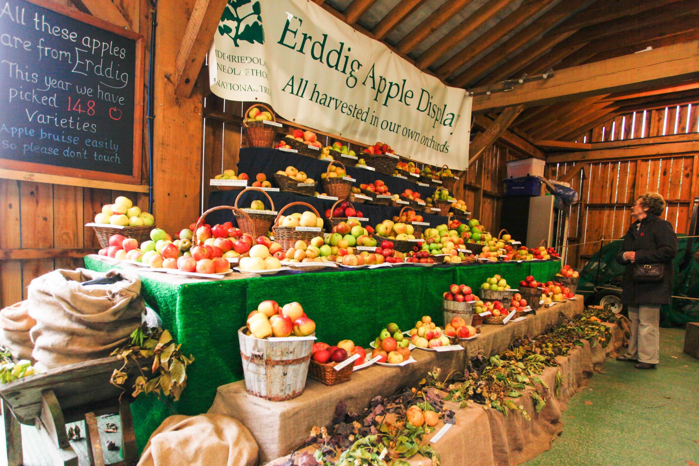 Erddig Apple Harvest returns for 29th year
