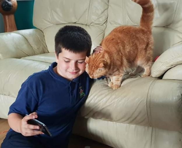 Find out why this Wrexham cat has been shortlisted for Pet Hero Of The Year