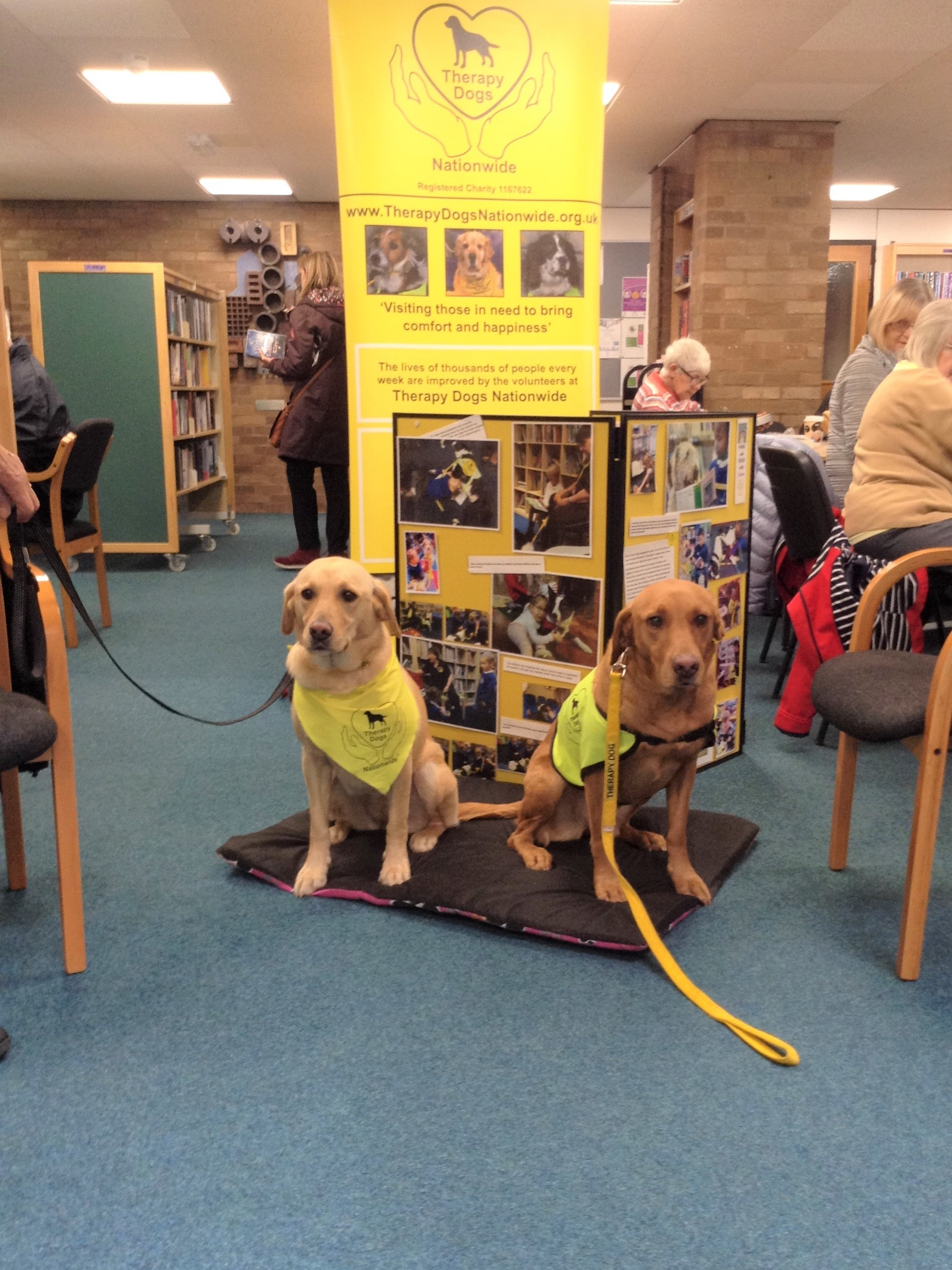 Therapy dogs pay a visit to Buckley Library