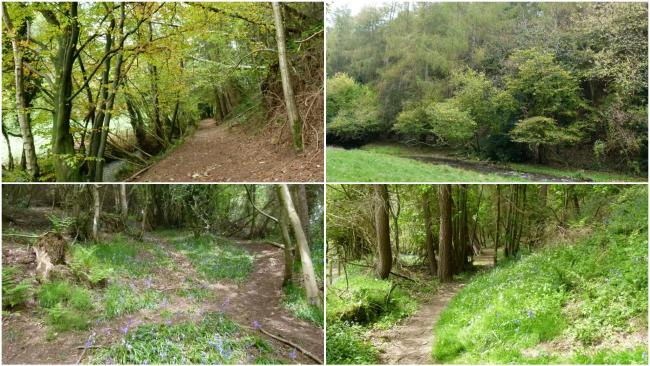 Woodland is up for sale in Flintshire. (Credit - Woods 4 Sale)