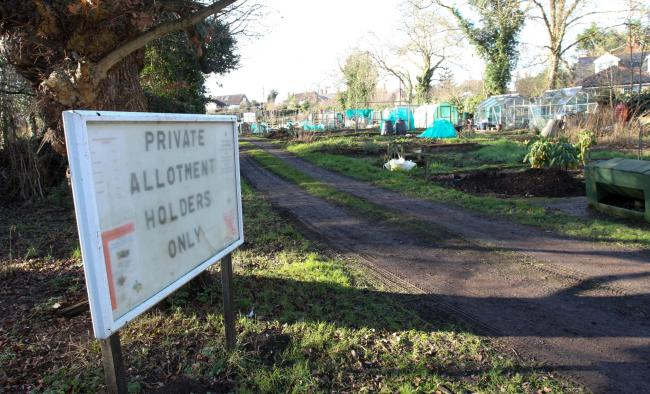 Mill Lane allotments in Connah's Quay
