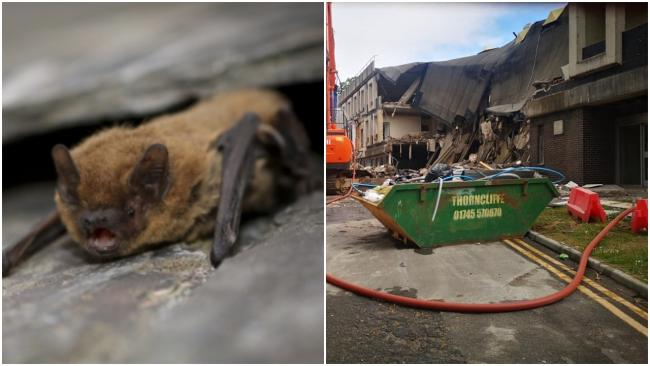 Flintshire Council has responded to concerns about the plight of bats known to roots in and around County Hall - parts of which are being demolished.