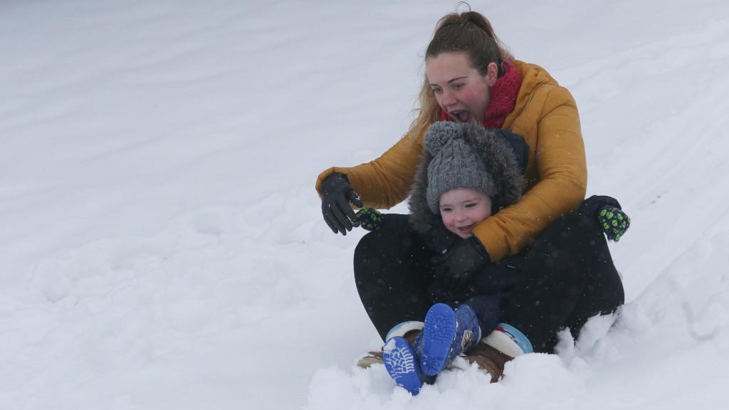 Snow provides perfect sledging conditions at Wrexham's Bellevue Park -  pictures