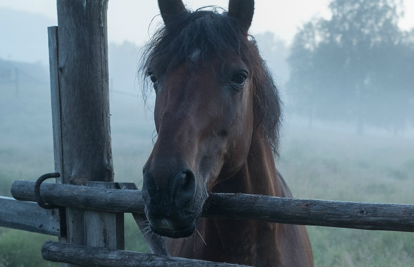 Generic image of horse
