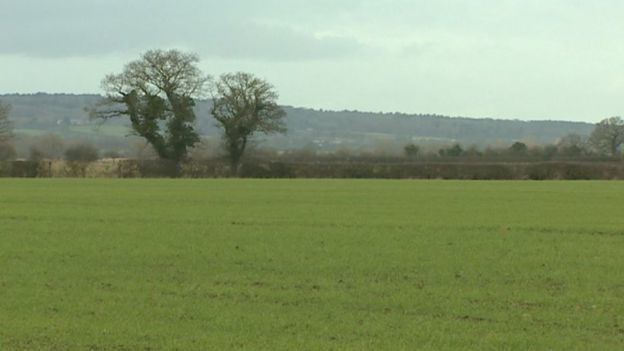 The rented field in Rossett was filled with sheep before the theft