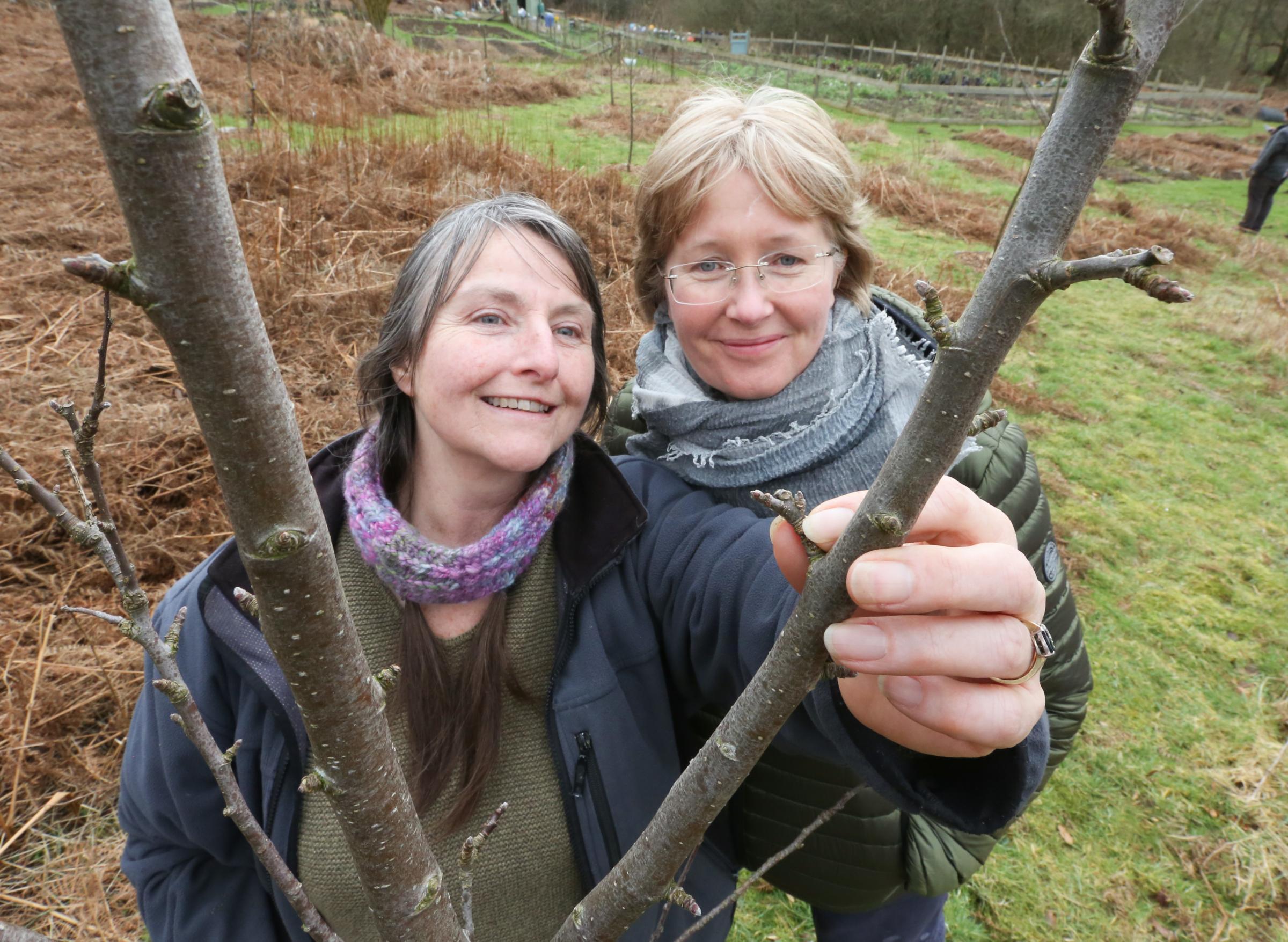 'A little piece of heaven' - go behind the scenes at Flintshire's community garden project