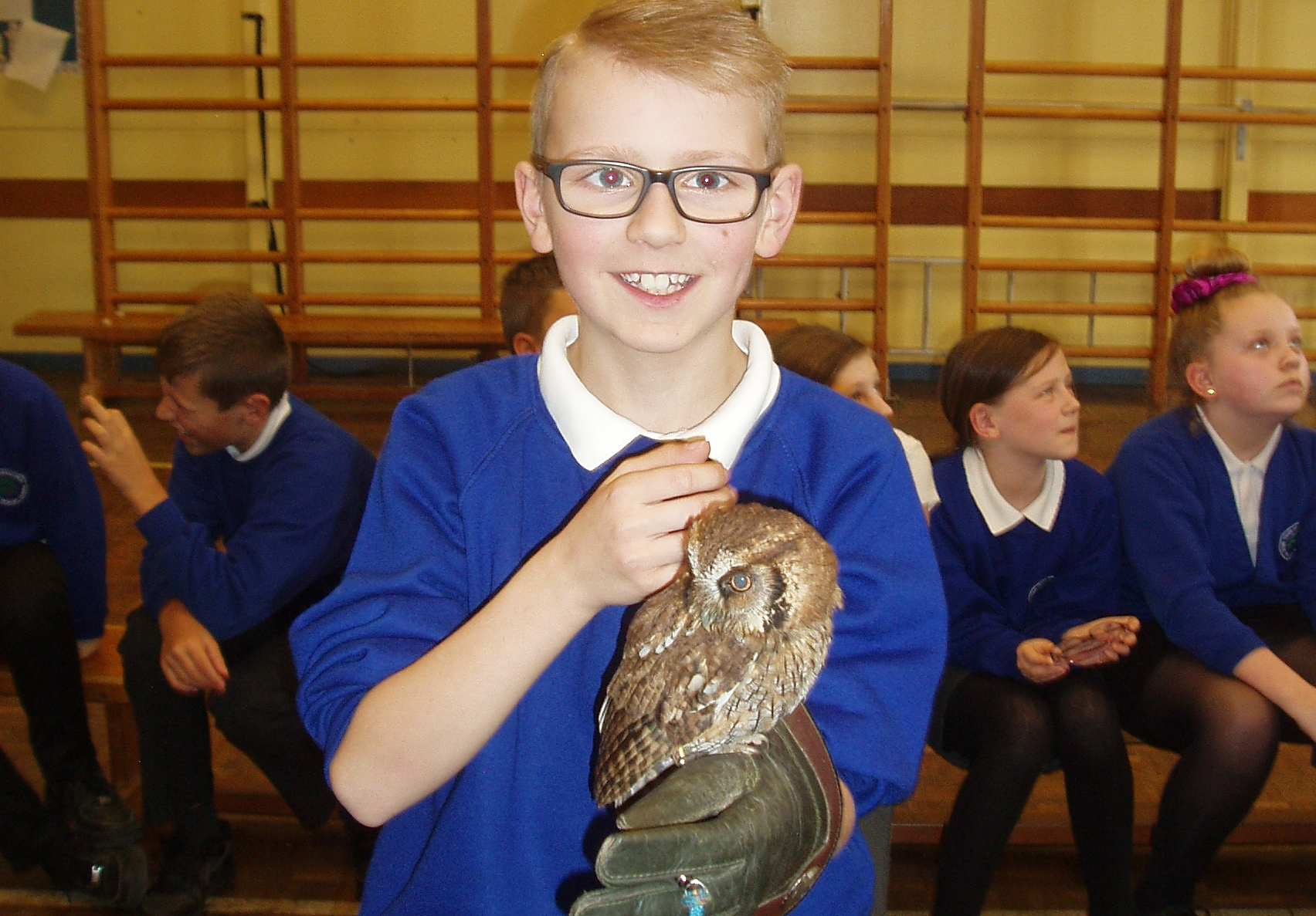 Flintshire primary school pupils get up close and personal with rescue owls