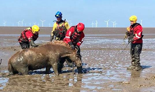 "Horse rescued from sinking sand with help from Flint coastguard team has ""recovered amazingly"""